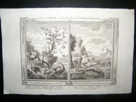 Millar 1782 Folio Antique Print. Birds of the World. Fish of Sierra Leone